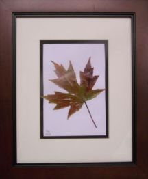 11 x 14 framed maple leaf with mat