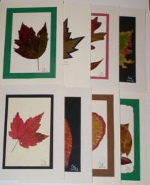 Christmas in July Sale! 8 assorted cards - $32.00