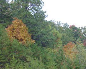 fall 2013 - 4