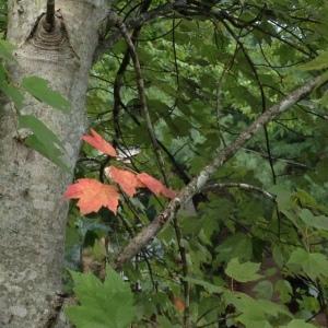 leaves 8-26-14